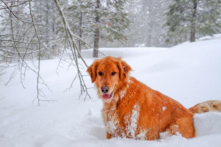 Jake the Dog!